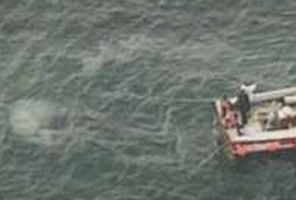 Whales - Secret vote bid fails at IWC