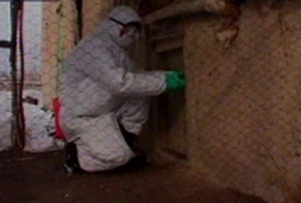 Turkey - 14 positive cases of bird flu