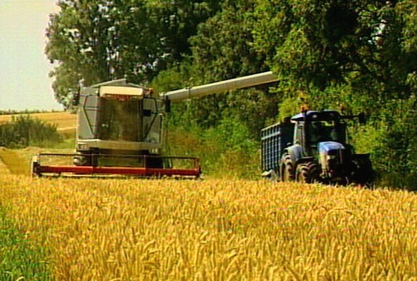 Wheat - Stocks at record low