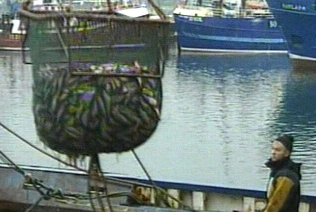 Fish - French fishermen exceeded their quota by 65%