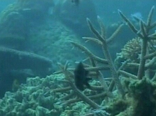 Climate change - Coral reefs under threat