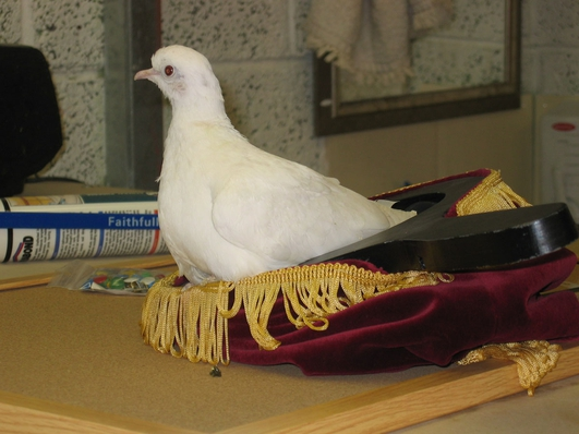 Birds used at weddings