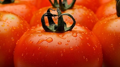 Catherine Fulvio's Tomato Sauce