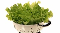 Green Salad with fresh herbs - The simple green salad gets a make-over