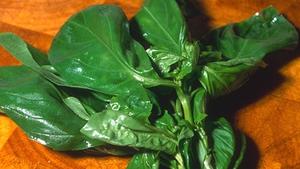 Corrigan Knows Food Recipe Steamed Bacon Cabbage