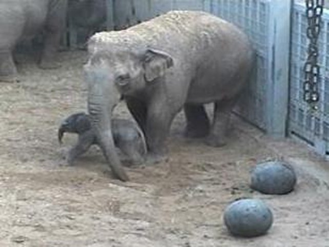 Dublin Zoo - Mother and baby doing well