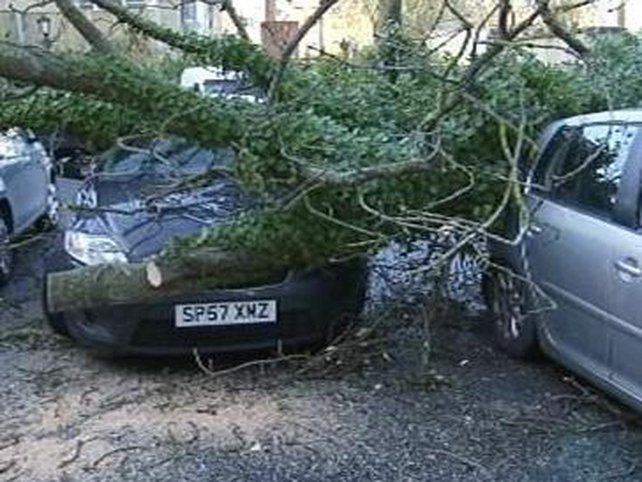 City West - Trees fell damaging cars