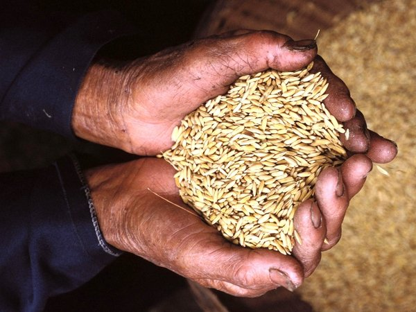 Rice - World Bank warning over rising prices