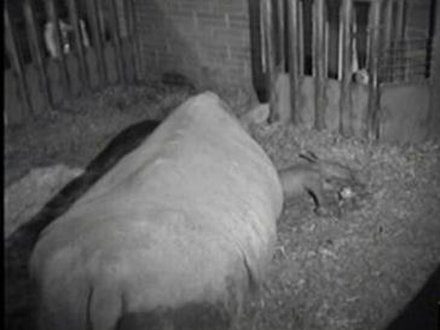 Ashanti - CCTV footage from Dublin Zoo