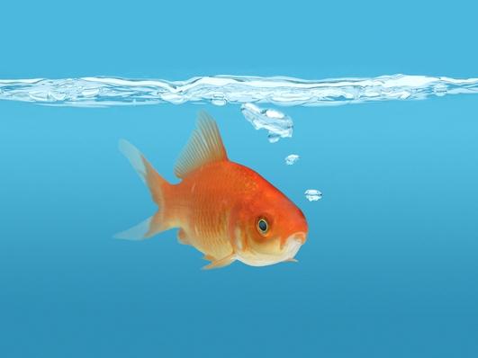 Hotel Goldfish
