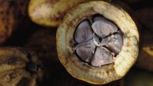 Raw Cacao Bon Bons