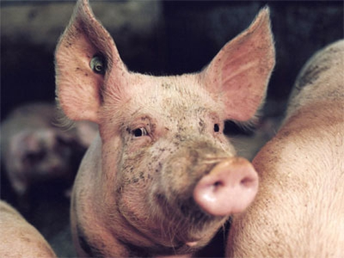 Irish pork - 22 countries known to be affected by scare