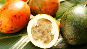 Tamasin Day Lewis's Citrus Fruit Salad
