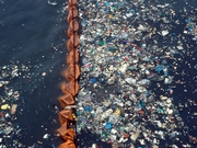 Researchers found 73% of deep water fish sampled had ingested plastic particles