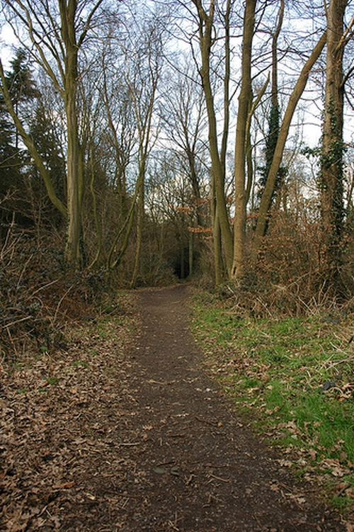 Kingsdown Woods