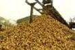 The Return Of Sugar Beet