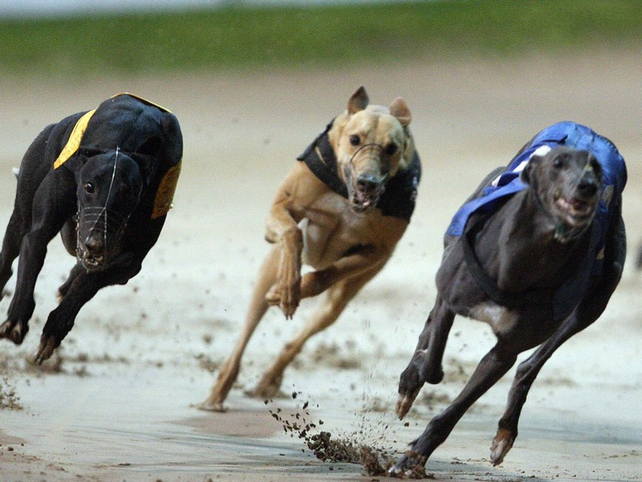 Gardaí have become involved in the latest case to rock greyhound racing