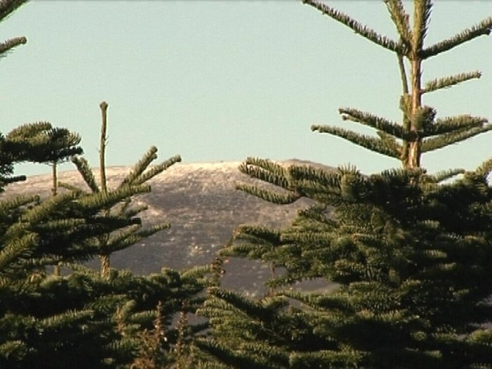 Christmas Trees Can Reduce Erosion
