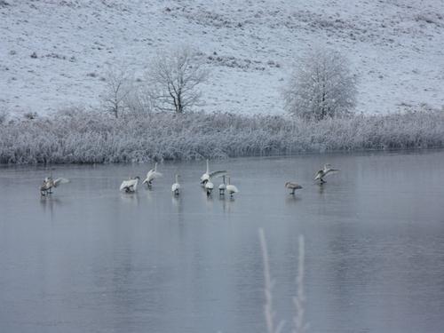 Freezing weather - 'Swan Lake' in Co Cavan - (Credit: Brian Daly)