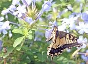 Radio 1 - Butterfly
