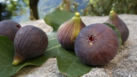 Baked Figs with Parma Ham - A delicious dish pairing figs with a some Parma ham from Neven Maguire.