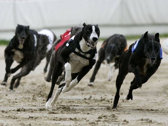 Greyhound Racing - Concerns over industry