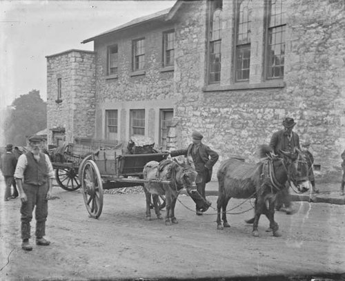 Donkeys - National Library of Ireland - Clarke Collection
