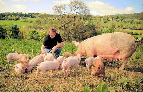Co-owner Alan Pierce on Gold River Farm