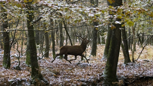 Stag hunting - Bill on ban passed in Dáil