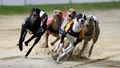 Greyhound meetings cancelled