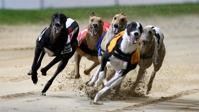 The cold weather continues to take its toll on greyhound racing