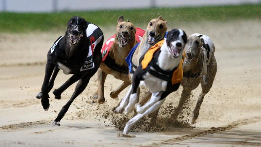 Online greyhound gambling sites sheraton casino