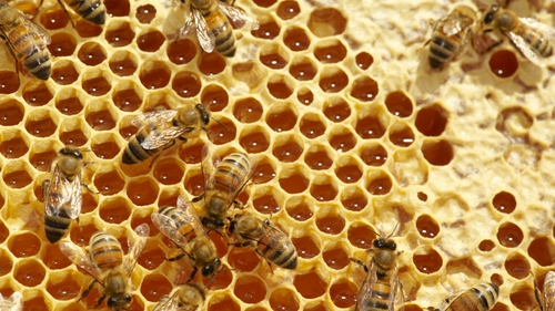 Bees help pollinate 90% of the world's major crops