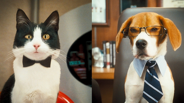 Cats and dogs are struggling to save the planet (and this movie)