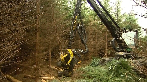 Coillte agrees new deal with Northern Ireland's forestry division