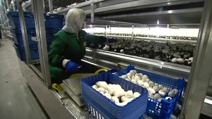 Monaghan Mushrooms employs 900 people in Ireland, 3,500 worldwide