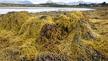 Seán Ó Gabháin, ón gcomhlacht 'Seaspray' & Noel Ó Laoi ón gComhlacht 'Organic Seaweed Company'.