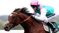 Queally quietly confident over Frankel