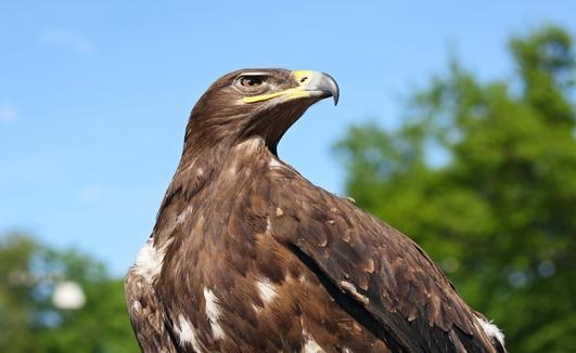 Scotland's Favourite Wild Animal
