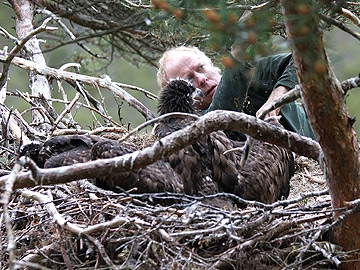 White tailed Eagle project