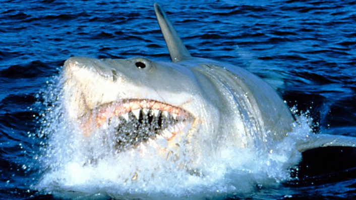 Jaws 40th Anniversary
