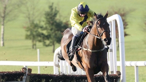 Recent results disappointing for Shinrock Paddy