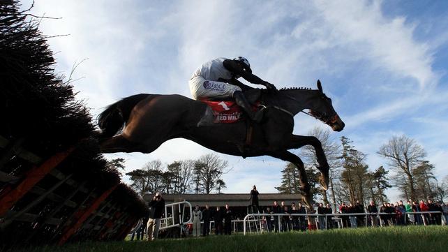 Dunguib hasn't seen a racecourse since the Cheltenham Festival of 2011