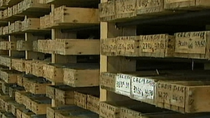 Conroy Gold's annual losses narrow