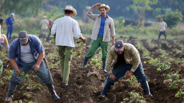 Cuba - The govt declared that agriculture is the most important sector in the country's new economic reforms