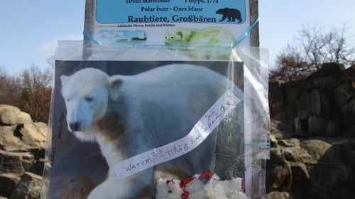 Germany - Knut died in compound