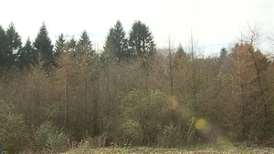 If it were to go ahead the renewable energy projects would primarily be built on Coillte land