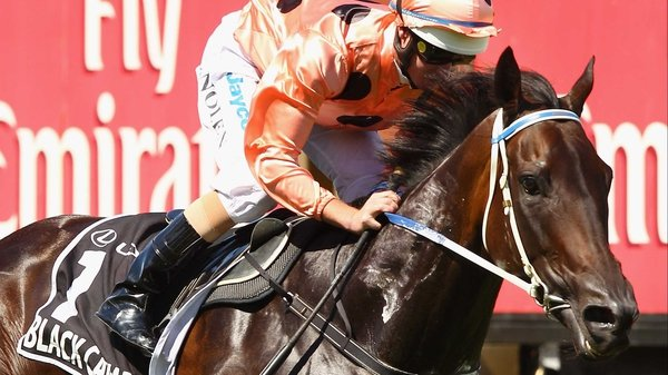 Black Caviar is likely to back up in next Saturday's Lightning Stakes at Flemington