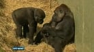 Nine News: Dublin Zoo welcomes new arrival