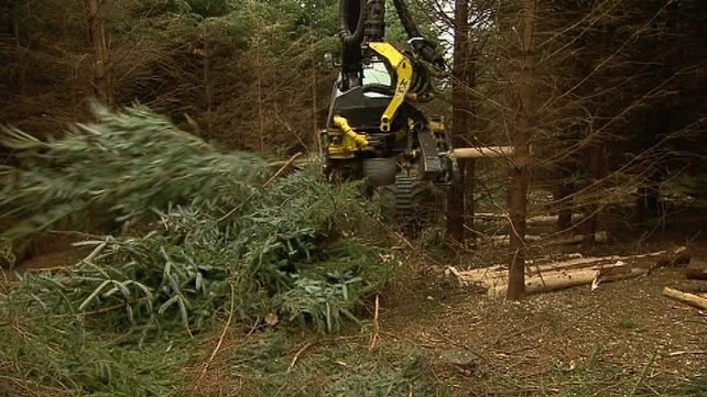 Coillte would need to sell the rights at almost double its average selling price in order for the State to cover costs